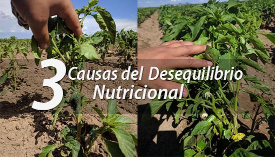 3 Causas del desequilibrio nutricional en las plantas